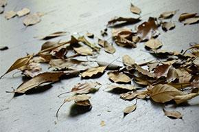 秋の漢方その2