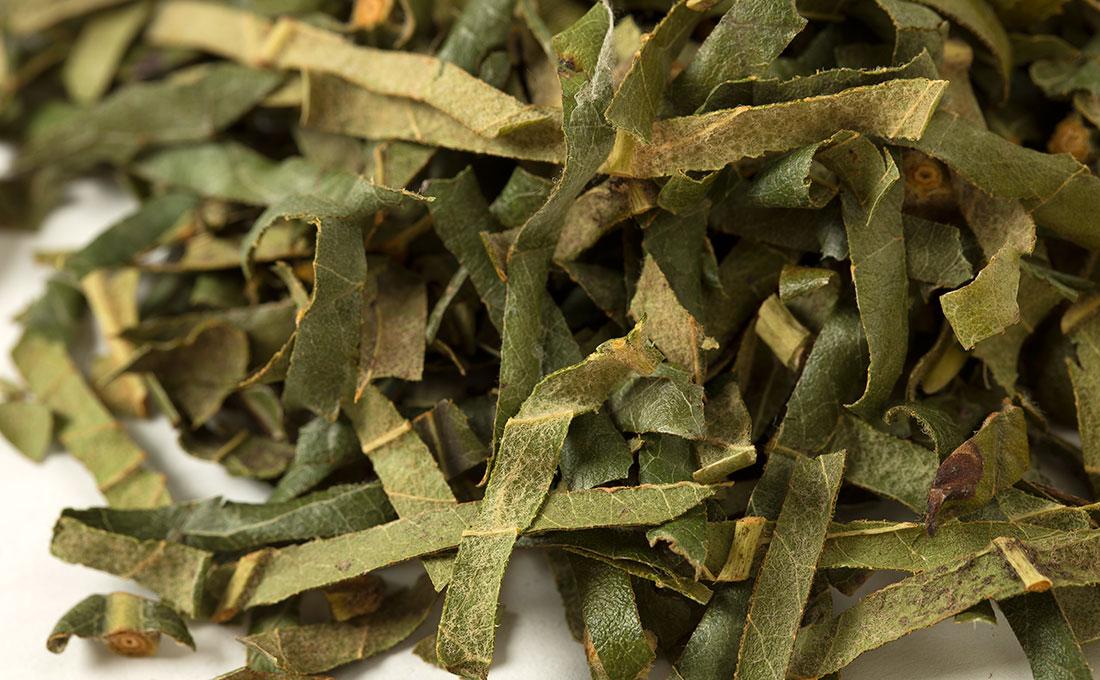 【国産】枇杷の葉(ビワノハ)500g